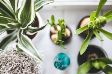 No Green Thumb? No Problem: 7 Easy Houseplants to Liven Your Living Space
